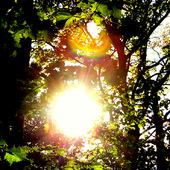 Słońca dla wszystkich!