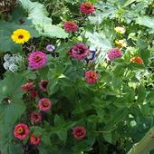 w tego miksu kwiatów letnich