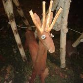 wczoraj spotkałam takiego jelonka w nocy