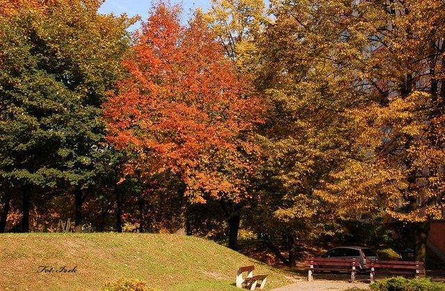 Jesień w mieście