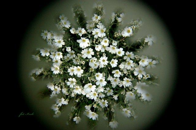 Kwiatki z