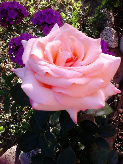 To ja też  coś w różu