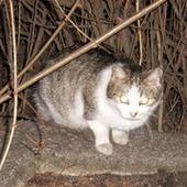 bezdomy kotek zdięcie z 2008
