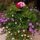 Kwiaty na bal