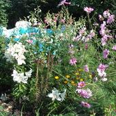 Pomiędzy kwiatami