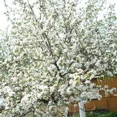 radosna biel kwiecia