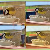 Sikorka na śniadanku