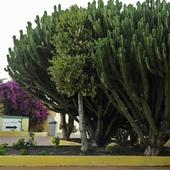 takiego drzewa