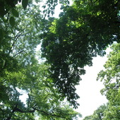 w górze,,,park koło Palmiarni w Gliwicach