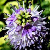 W kolorze lila