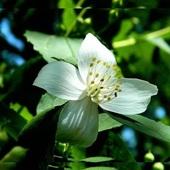 Wiosenny, biały i mocno pachnący
