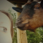 Ja i ciekawska koza z Ede