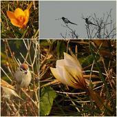 lutowa wiosna ................