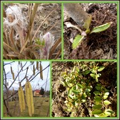 Postępy wiosny:)