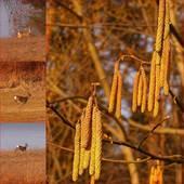 szukając wiosny ................