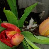 Ukryta w tulipanach czaiła się na pączki