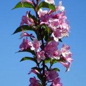 Wiosenny krzew