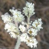 zimowy kwiat