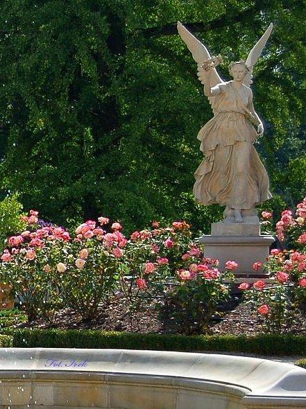 Róże i Anioł