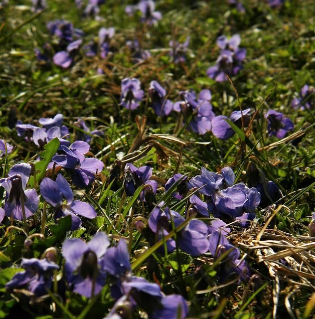 Wiosna w tym roku 21