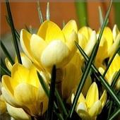 Dla Panów wiosenny bukiecik