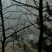 Mgła i drzewa