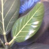 Nowe liście