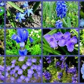 Przesyłam Wam błękit , nareszcie jest pięknie :)