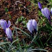 Wiosna u mnie