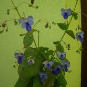 Co raz więcej kwiatów