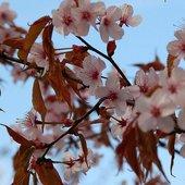 Kwiaty drzewa