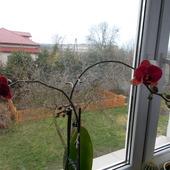 mój skarbuś ma z dnia na dzień więcej kwiatów i pąków :)