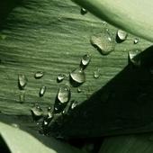 Rośliny5