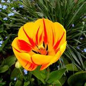 Tulipkowe co nieco :)