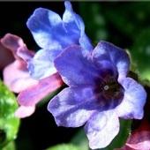 W błękicie i różu