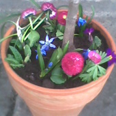 Wiosna w doniczce ;)