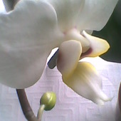 znowu kwitnie