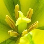 Żółto-zielony Tr�