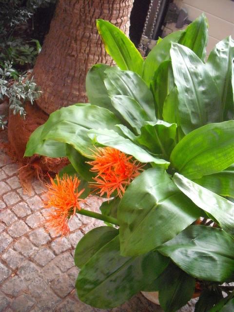 Krasnokwiaty