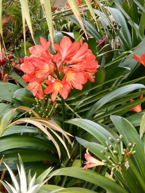 kwiaty z Palmiarni..Glasgow