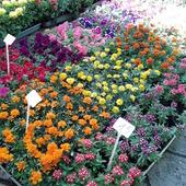 Dywaniki kwiatowe na targu