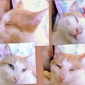 Fotki z felino terapii