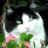 Isia W Kwiatkach:)