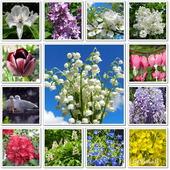 Najpiękniejsze majowe kwiaty,konwalie,bzy,różaneczniki...