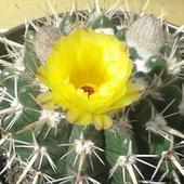 No to pierwszy kaktusik ruszył :)