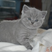 Przedstawiam Wam moją koteczkę:)