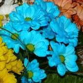 Trochę  błękitnych margeritek dla  was.pozdrawiam serdecznie