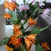 wielkanocny kaktus w dzień