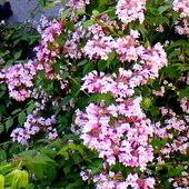 Były kwiatki ( odnośnie wczorajszej fotki)