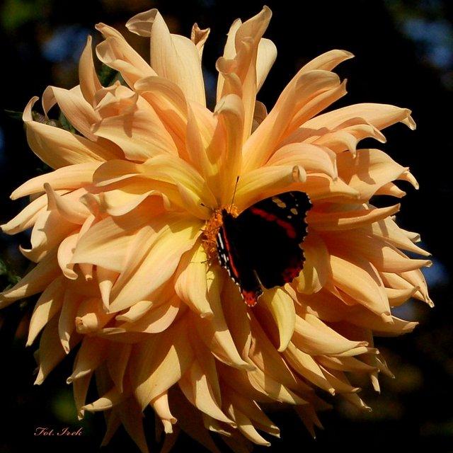 Kwiat i motyl